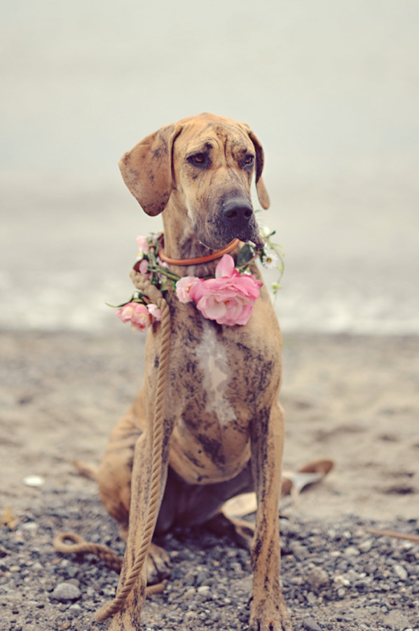 Dog with flower wreath on Vancouver Island beach