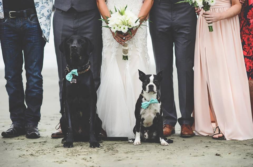 Puppy in bowtie with beach wedding party