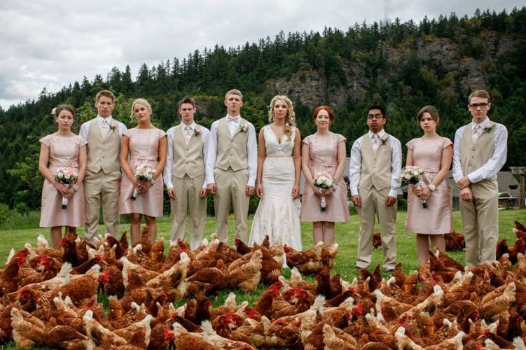 Wedding Party with Chickens on Vancouver Island
