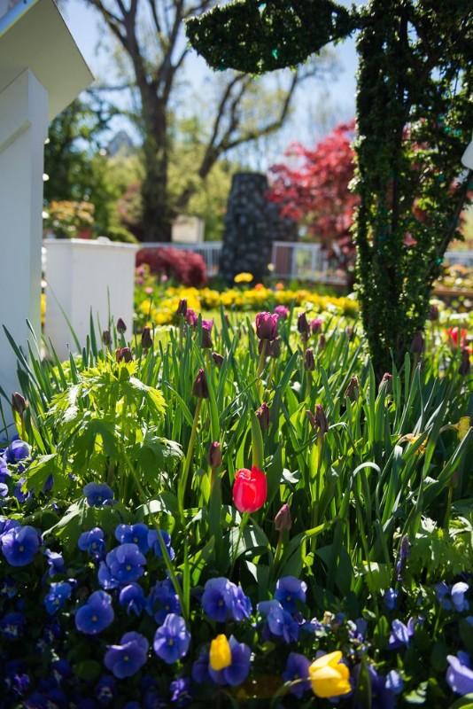 exterior-tulips_4_orig
