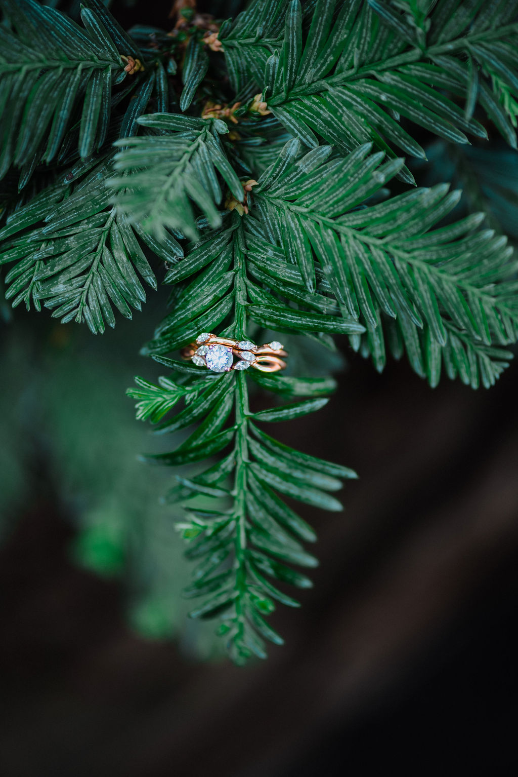 Happily Ever After wedding rings on fern by Megan Maundrell