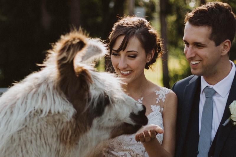 Bride Feeding Llama at Elegant Country Wedding on Vancouver Island