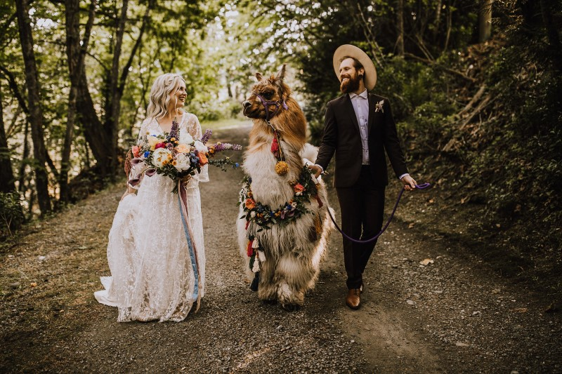 Bride and Groom With Llama on Vancouver Island