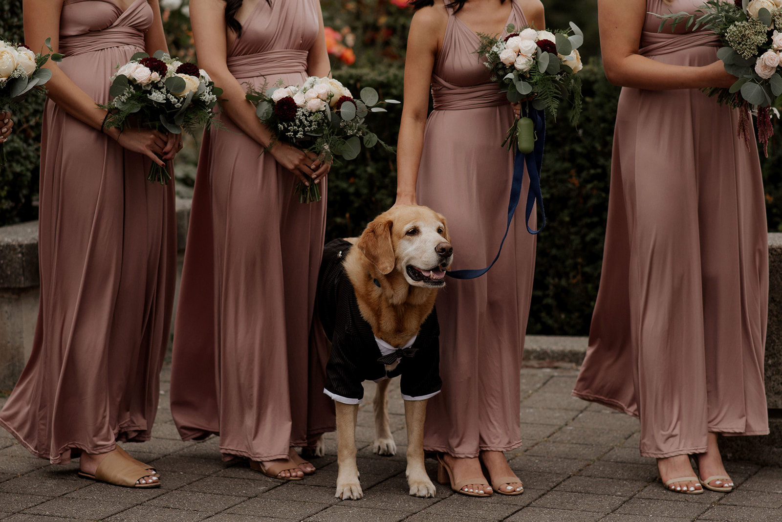 Dog in tux stands with bridesmaids in blush rose gowns