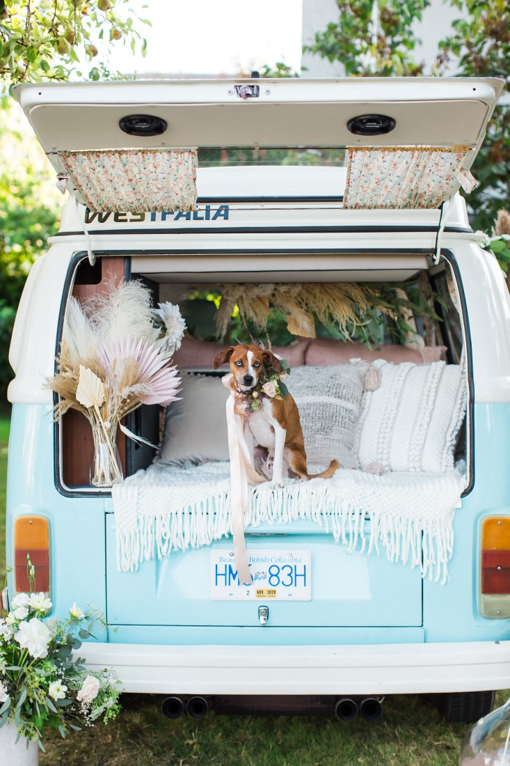 Dog stands in back of blue and white Volkswagen van with wedding sign