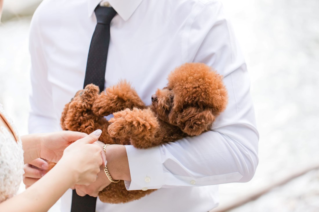 Pawsome puppy in groom's arms
