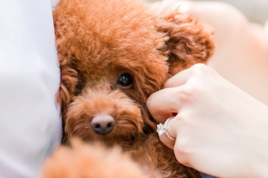 Pawsome Engagement Shoot puppy and diamond ring