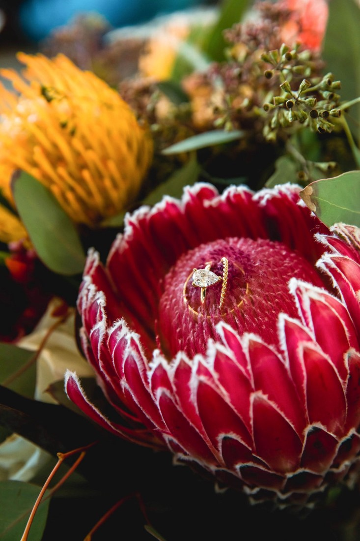 Rings by Cavalier Gastown Vancouver sit on large pink protea by Maple Ridge Floral Ltd