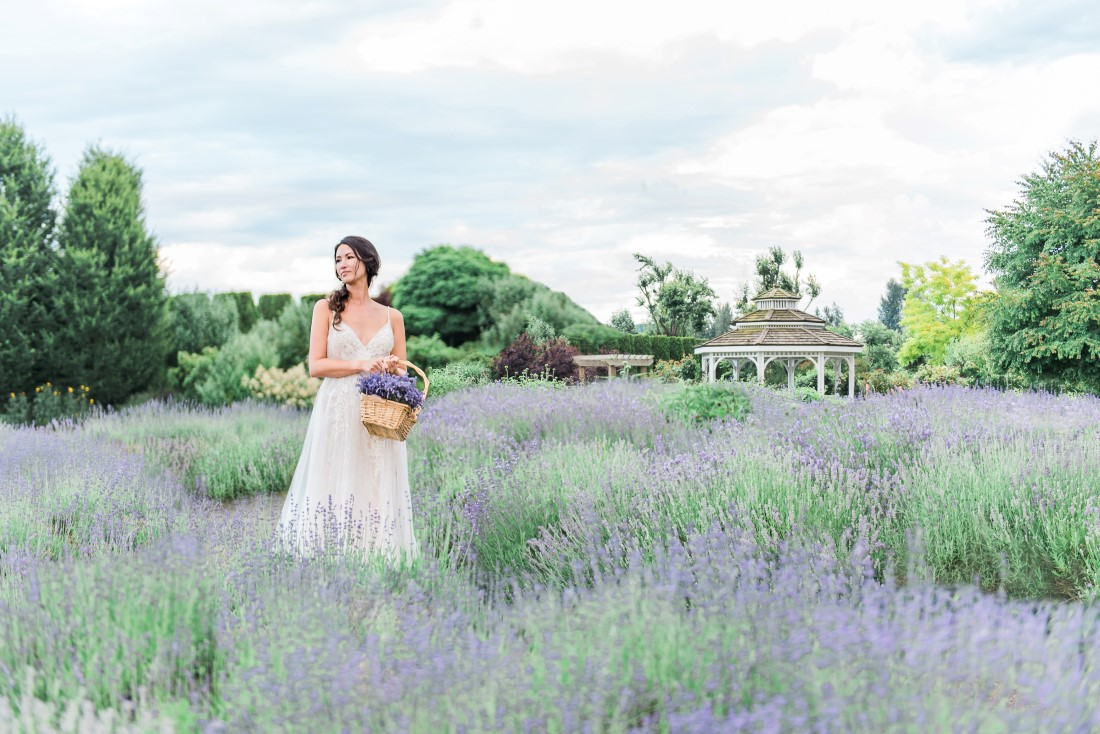 Wedding Lavender in Bloom at Tuscan Farm Garden with white gazebo and bride