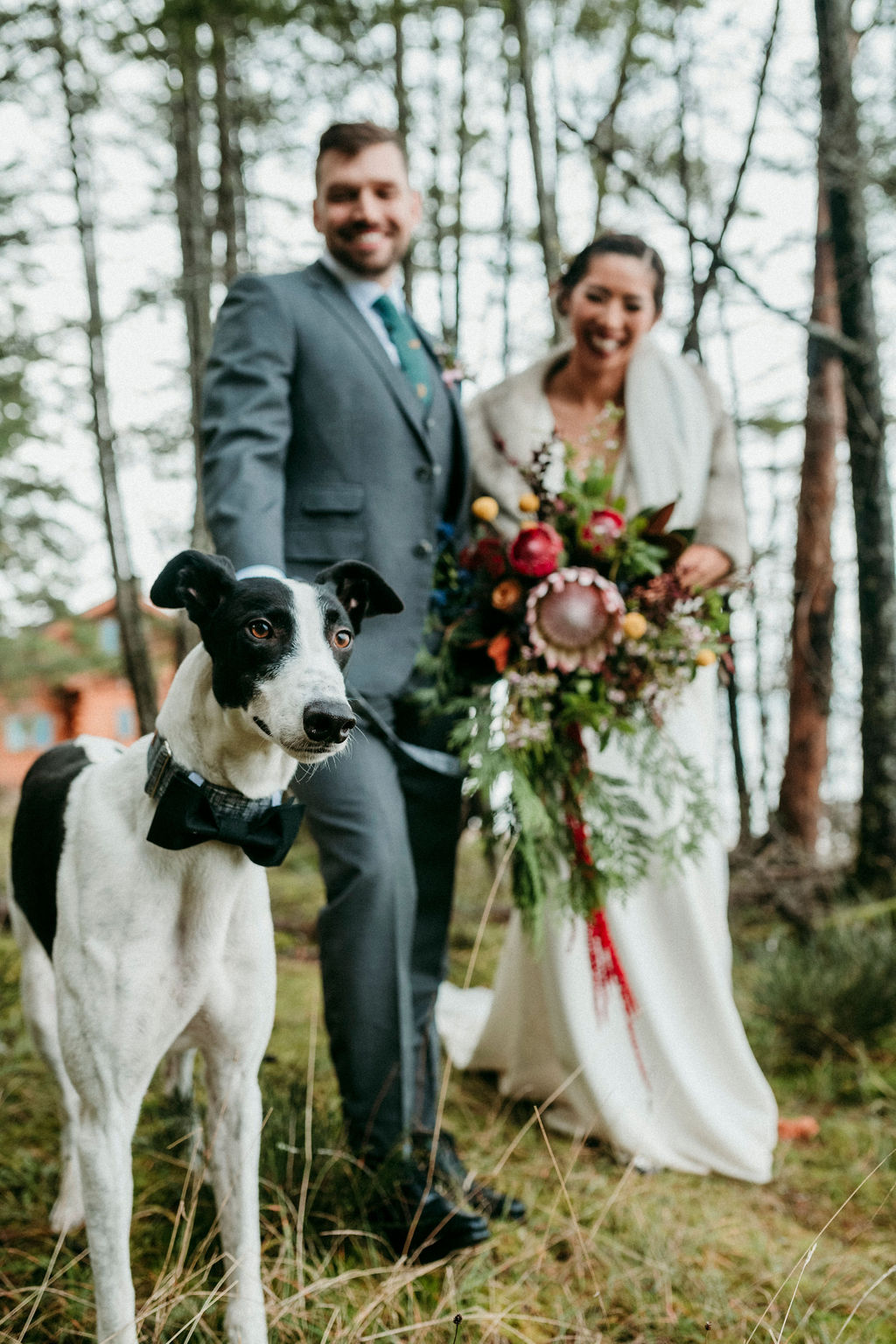 Changing Plans Anastasia Photography wedding dog in bowtie