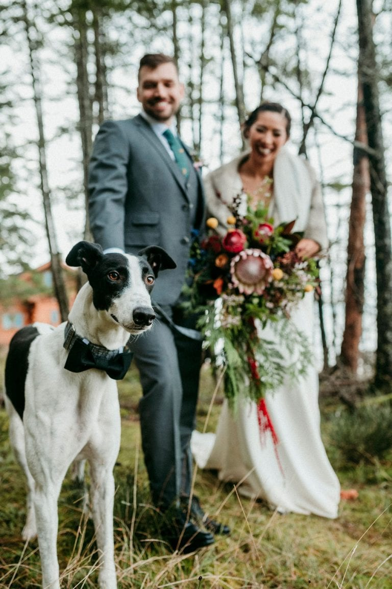 Dog peers at camera with newlyweds behind him by Anastasia Photography